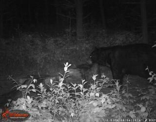 FlickWild Outdoors Videos - Bears